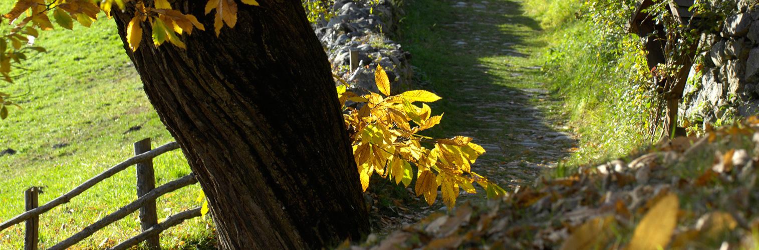 Herbst in Südtirol im Eisacktal